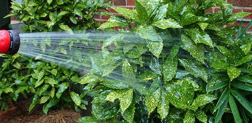 ask-julie-watering-plant-foliage-1